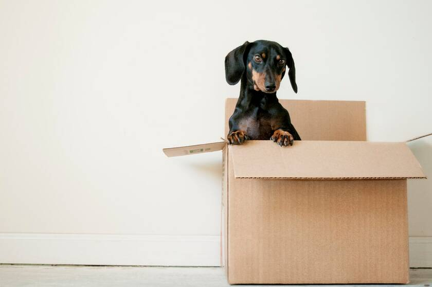 black and brown dachshund standing in a box | © Erda Estremera, uubuart.squarespace.com